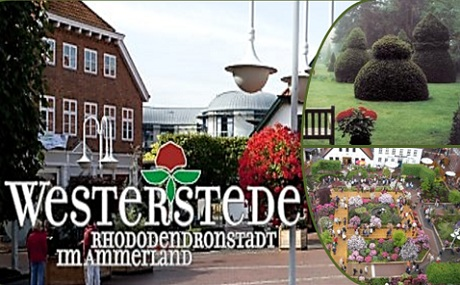 Single party westerstede